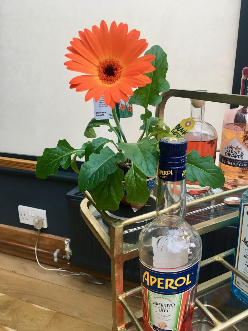 Aperol and a gerbera to match