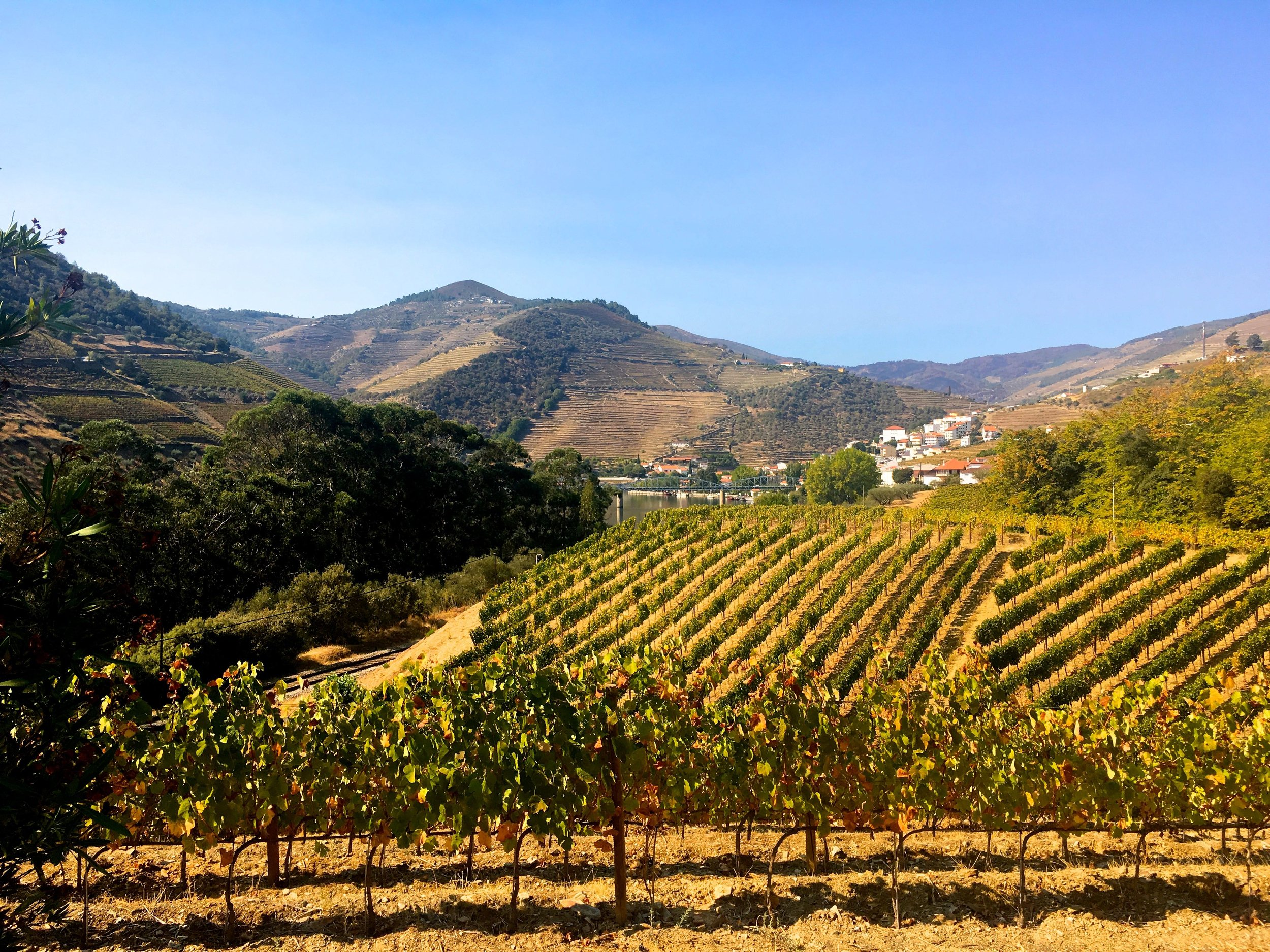 A view over the vineyards at Quinta da Bomfim in the Douro valley