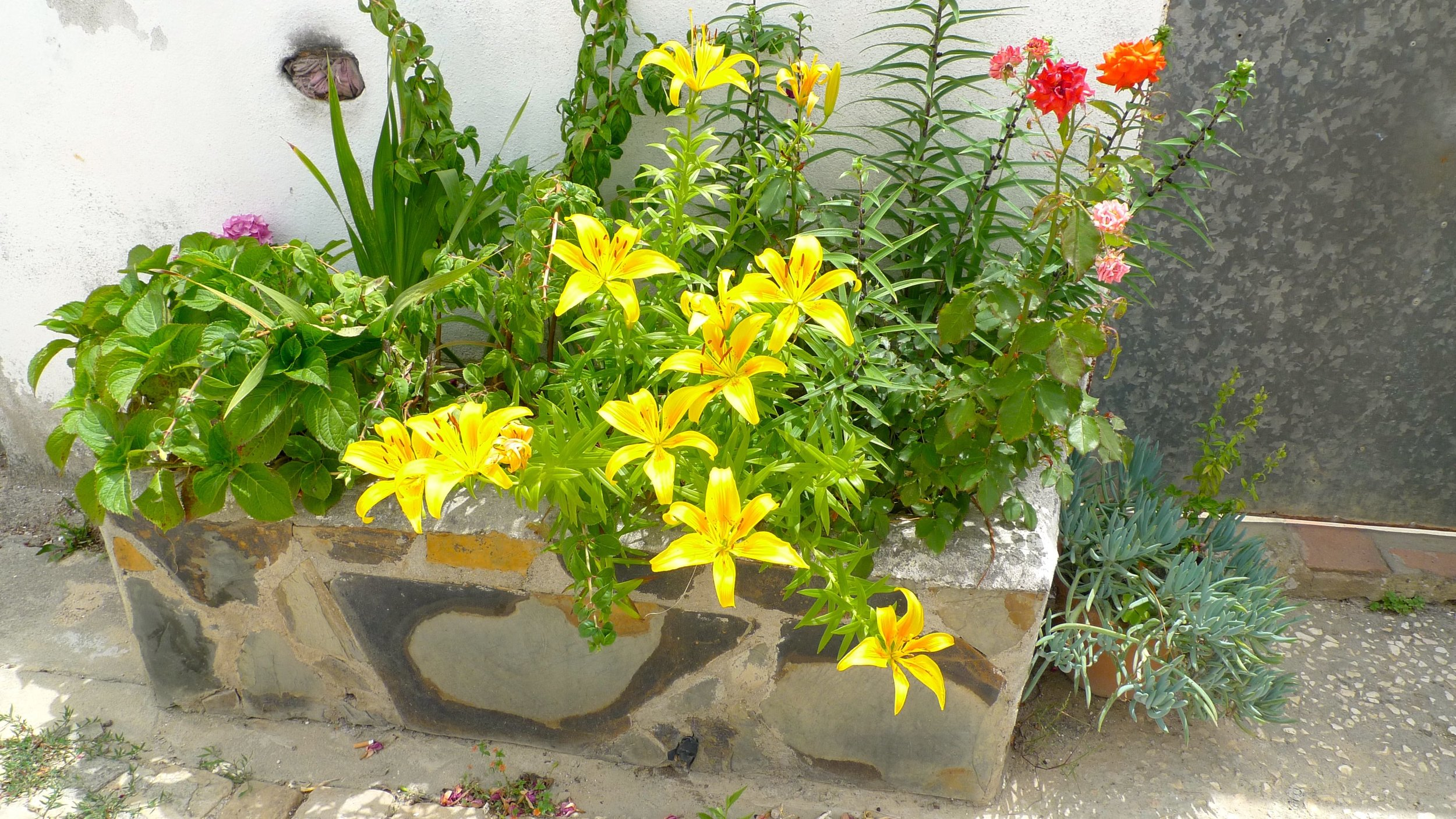 A stone planter complete with brightly coloured flowers