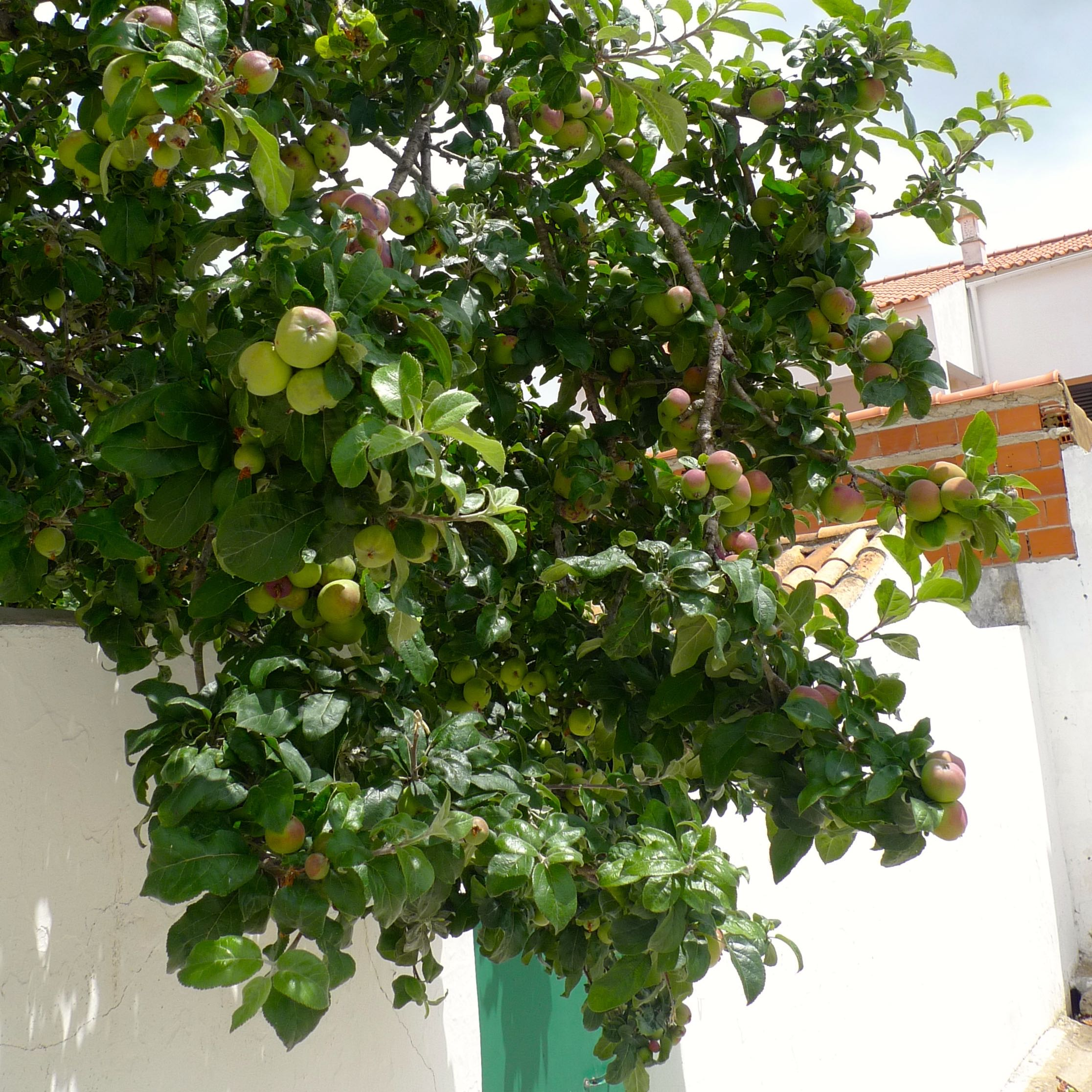 Fruit trees in the Alentejo