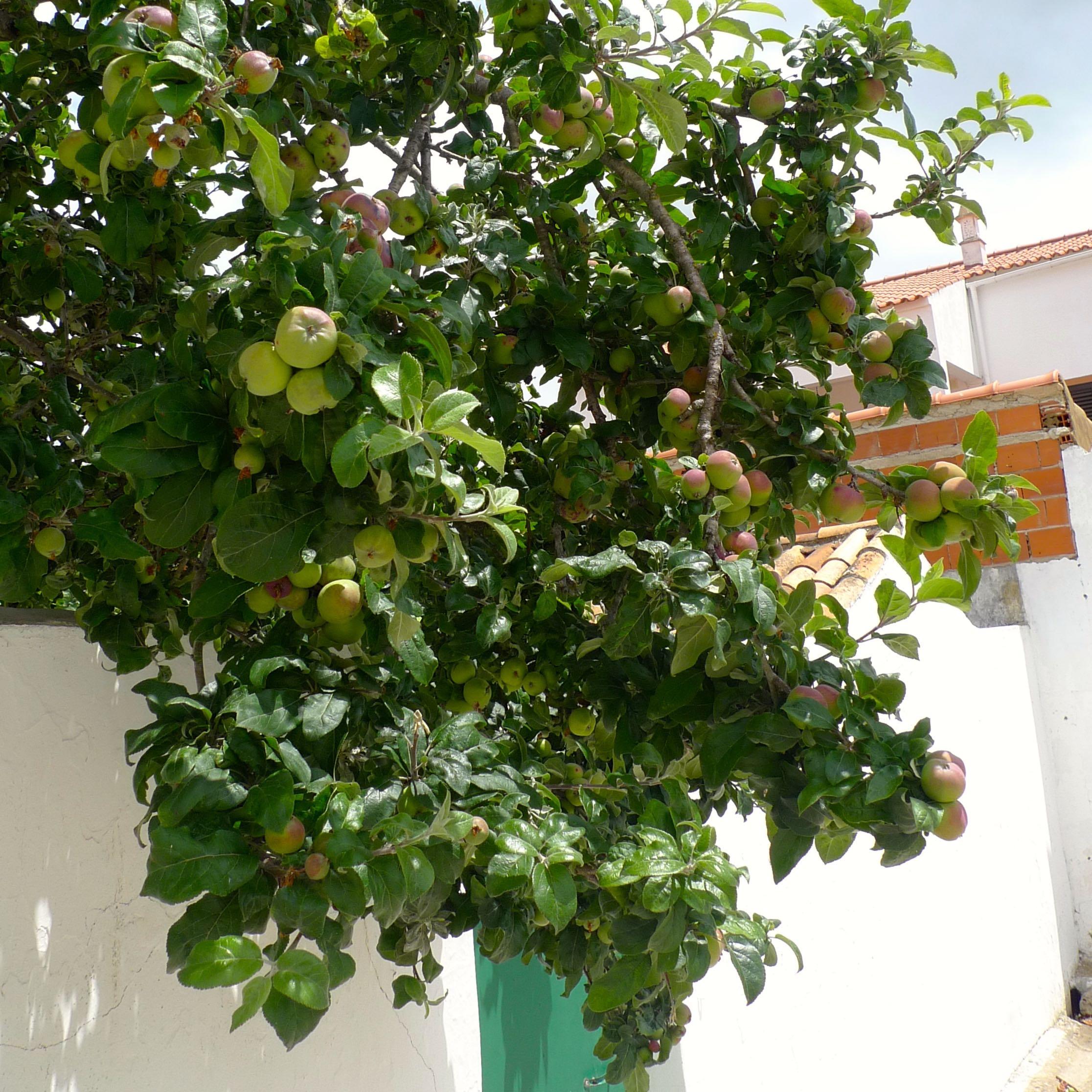 Fruit trees in the Alentejo