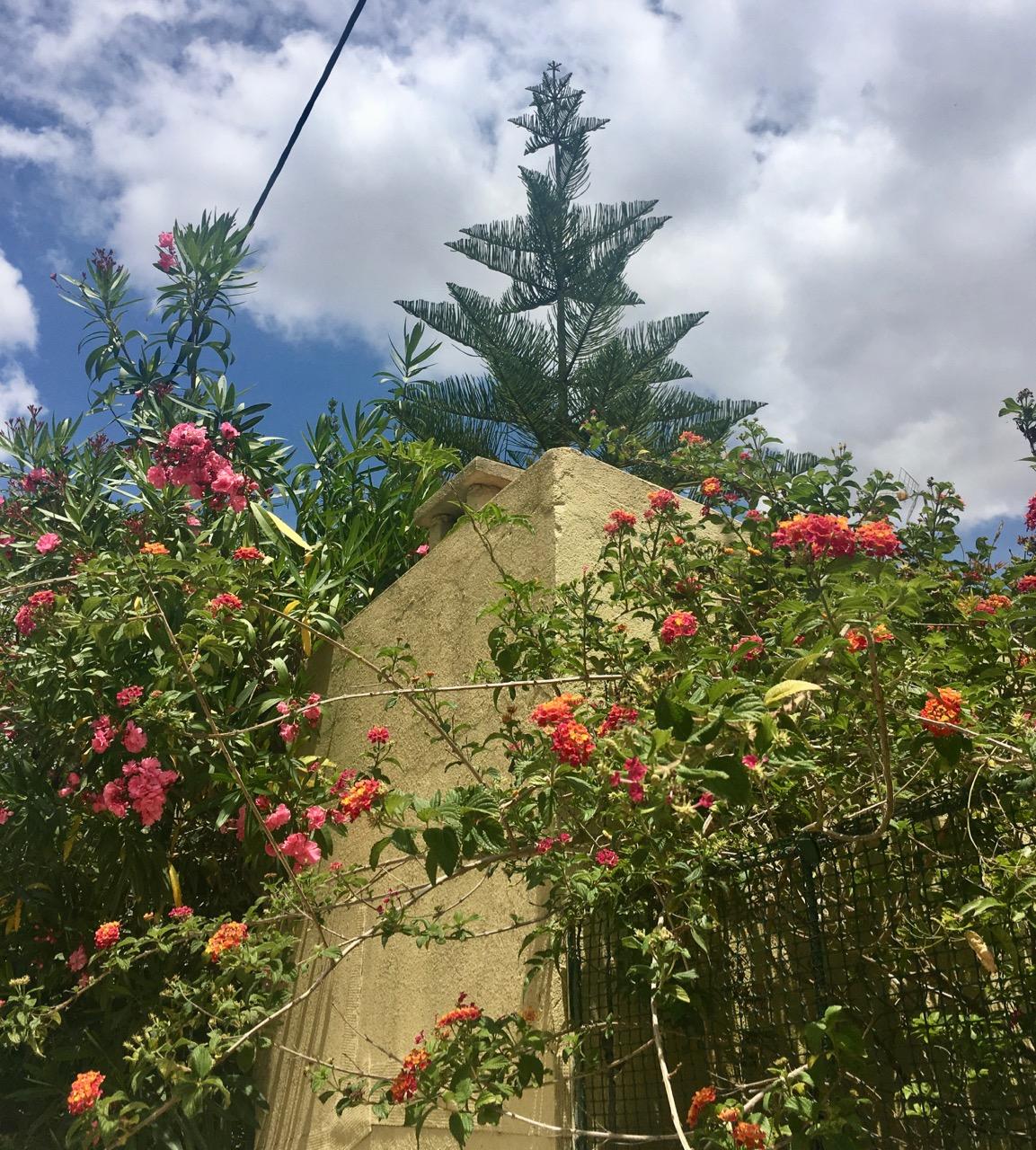 a pretty portuguese corner