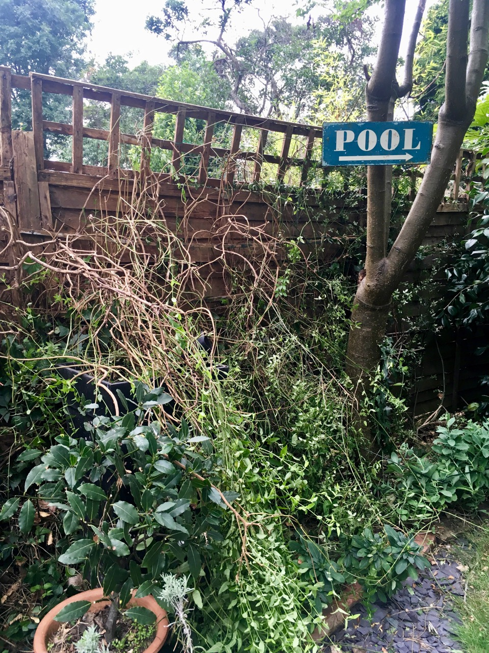 tidying and tying up plants on the fence