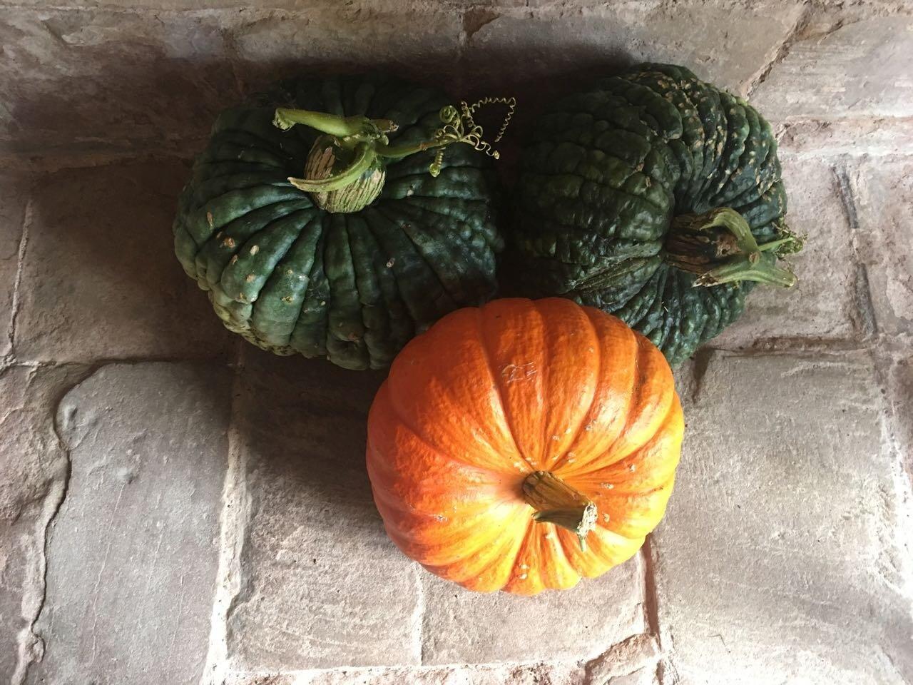 pumpkins at Kenilworth Castle