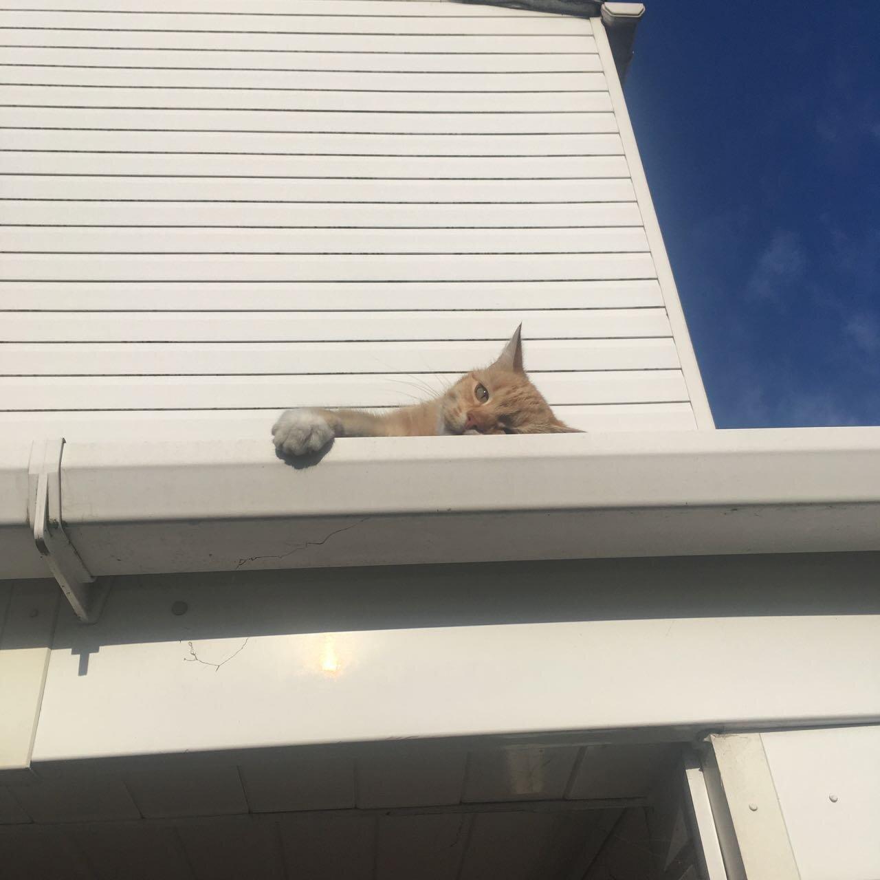 cat-batheing in the sun