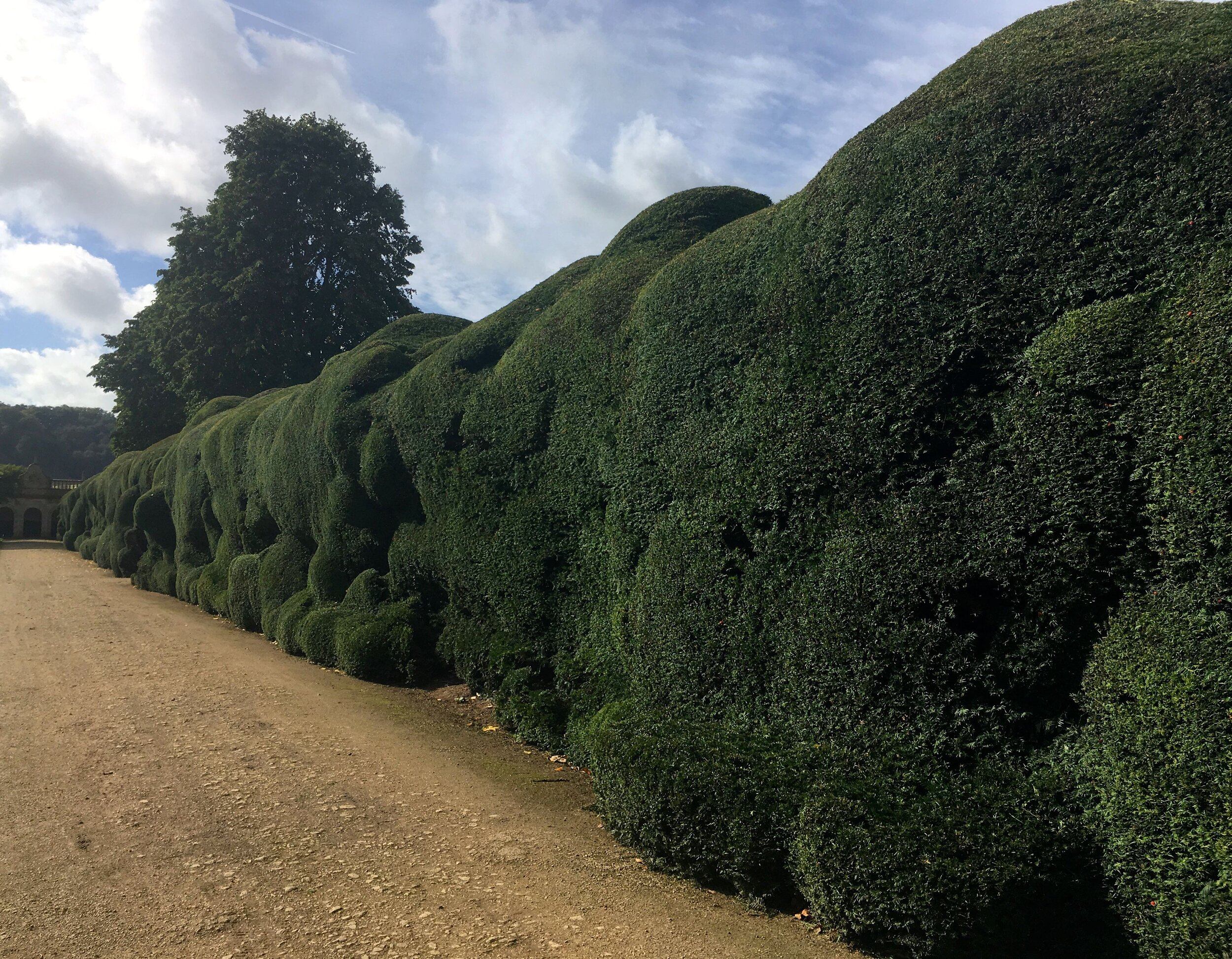 A bubble hedge at Montacute House in Somerset