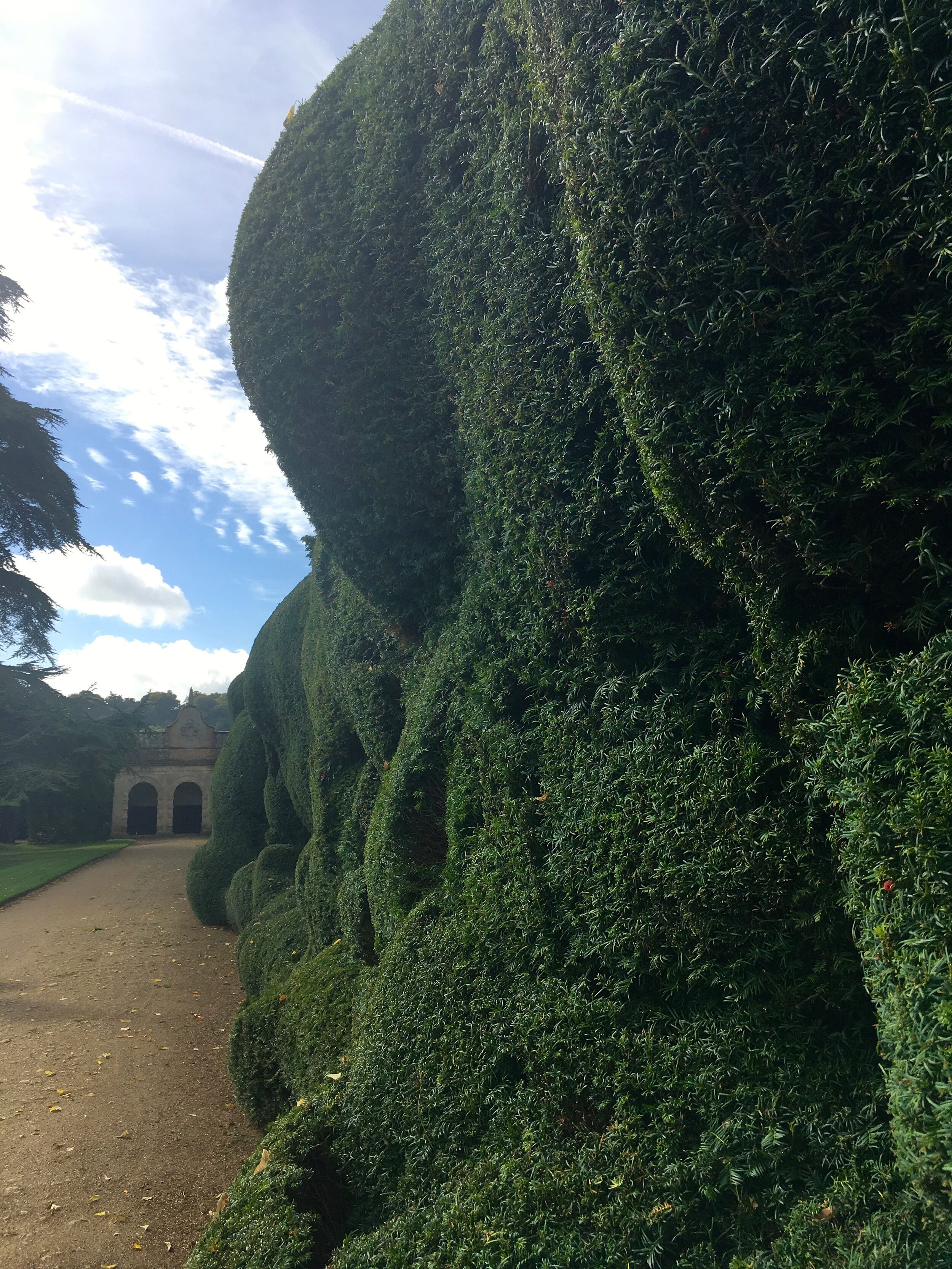 a bubble or a cloud - what do you think this hedge looks like