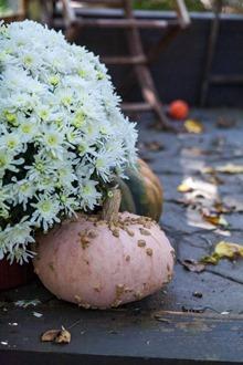 Harvest setting