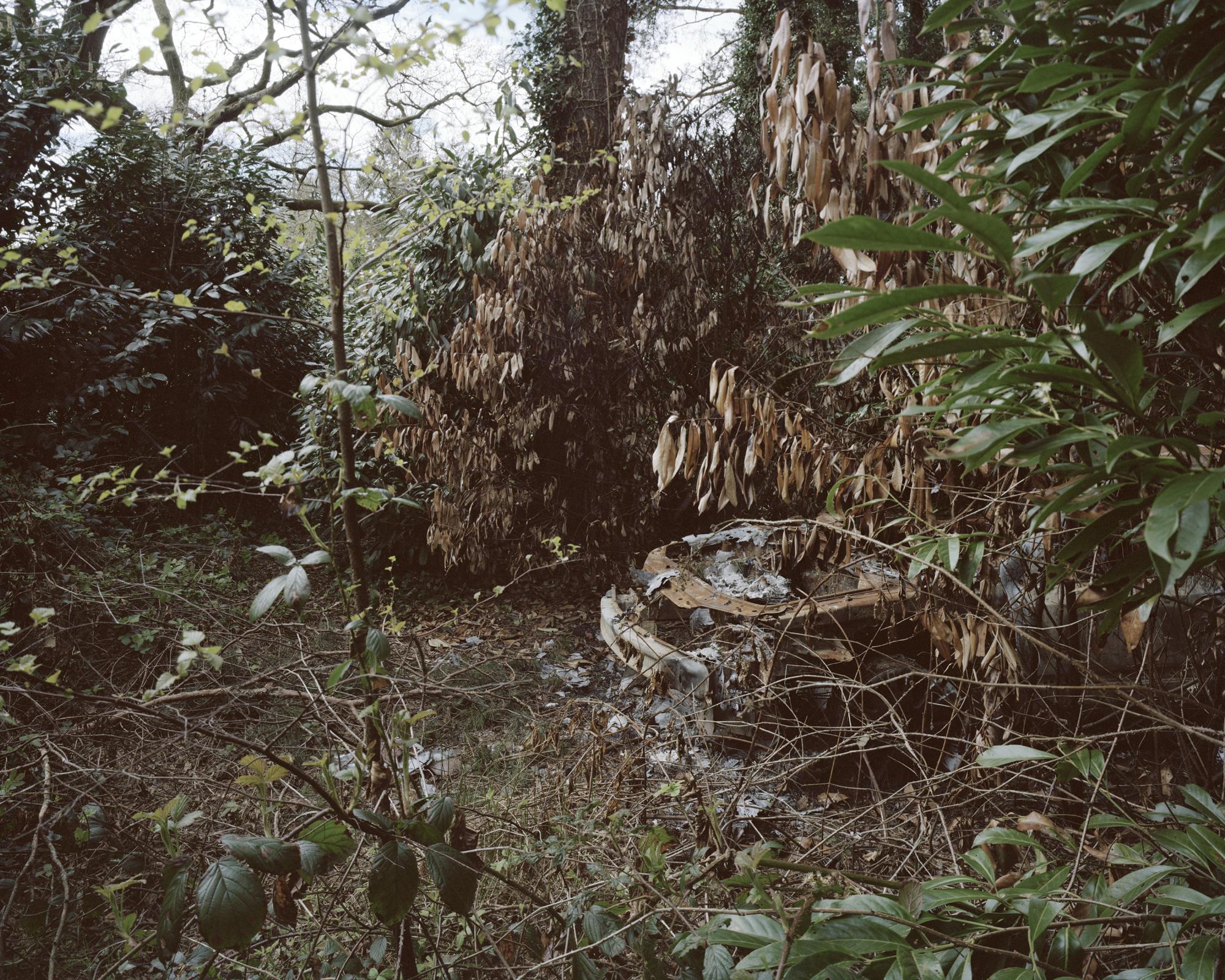 5 woods 001 copy.jpg