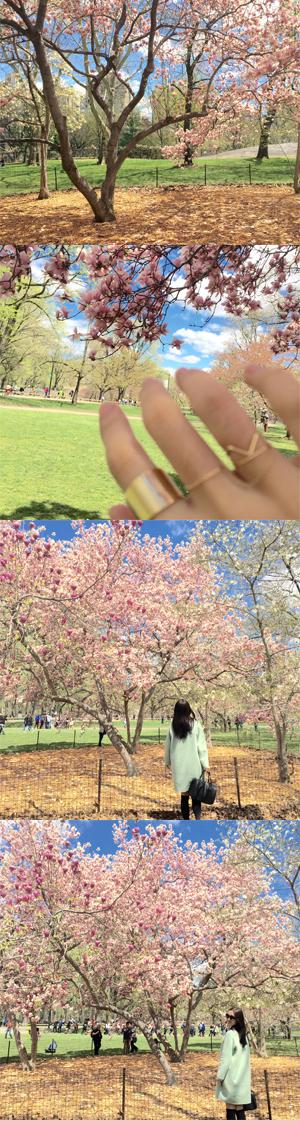 June Lemon Girl junelemongirl Fashion Style Blog blogger cherry blossom central park mint green jacket black satchel bag furla over the knee socks chanel sunglasses