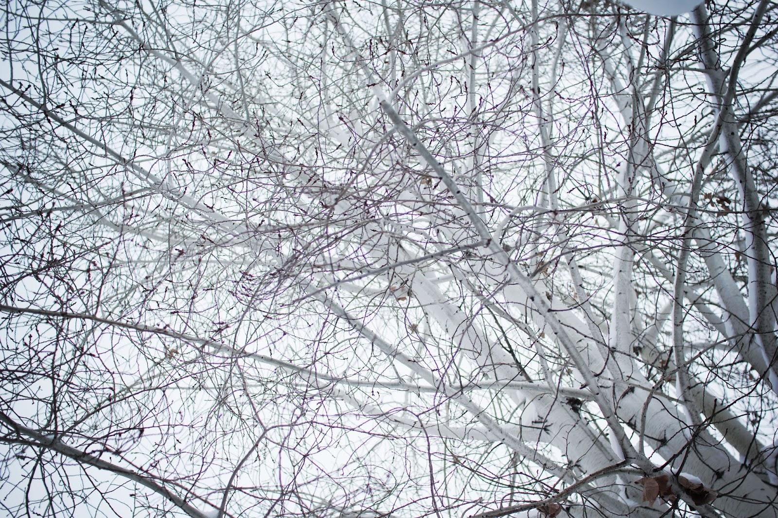 winter, trees, snow, white, junelemongirl, delune