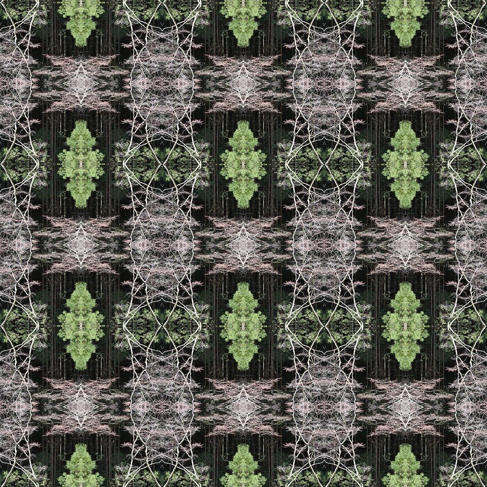 trees_b.jpg