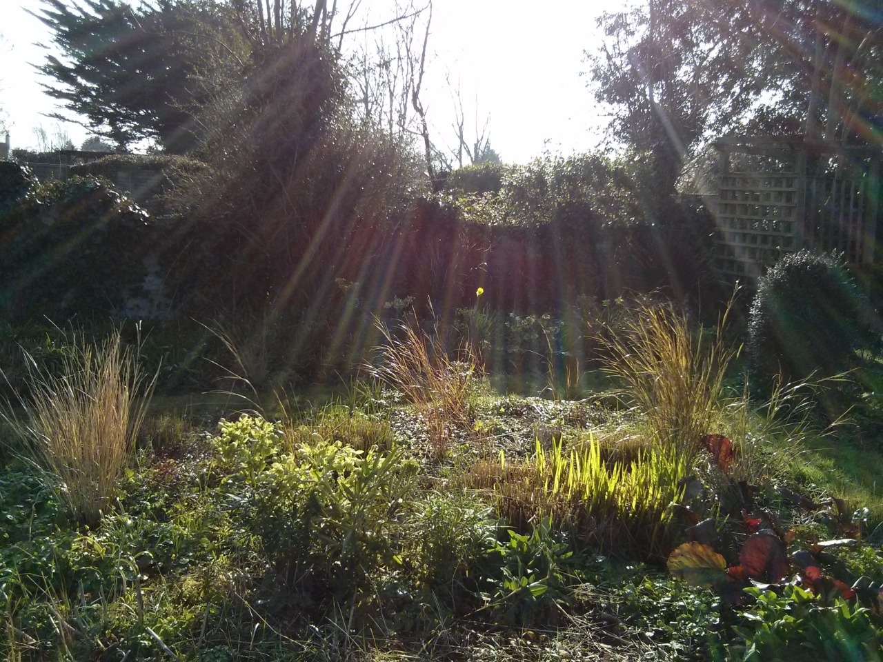 Mild, sunny and feeling a bit like spring in the garden this morning; the birds are all singing and things are starting to grow. There are even a few bees about.