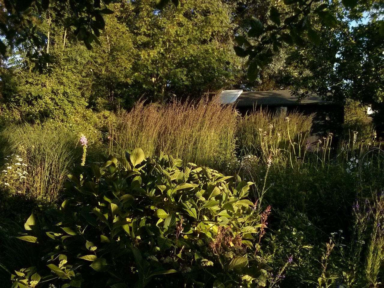 The light here is sparkling and clear in the summer heat; This is the garden yesterday evening as things started to cool down a little.