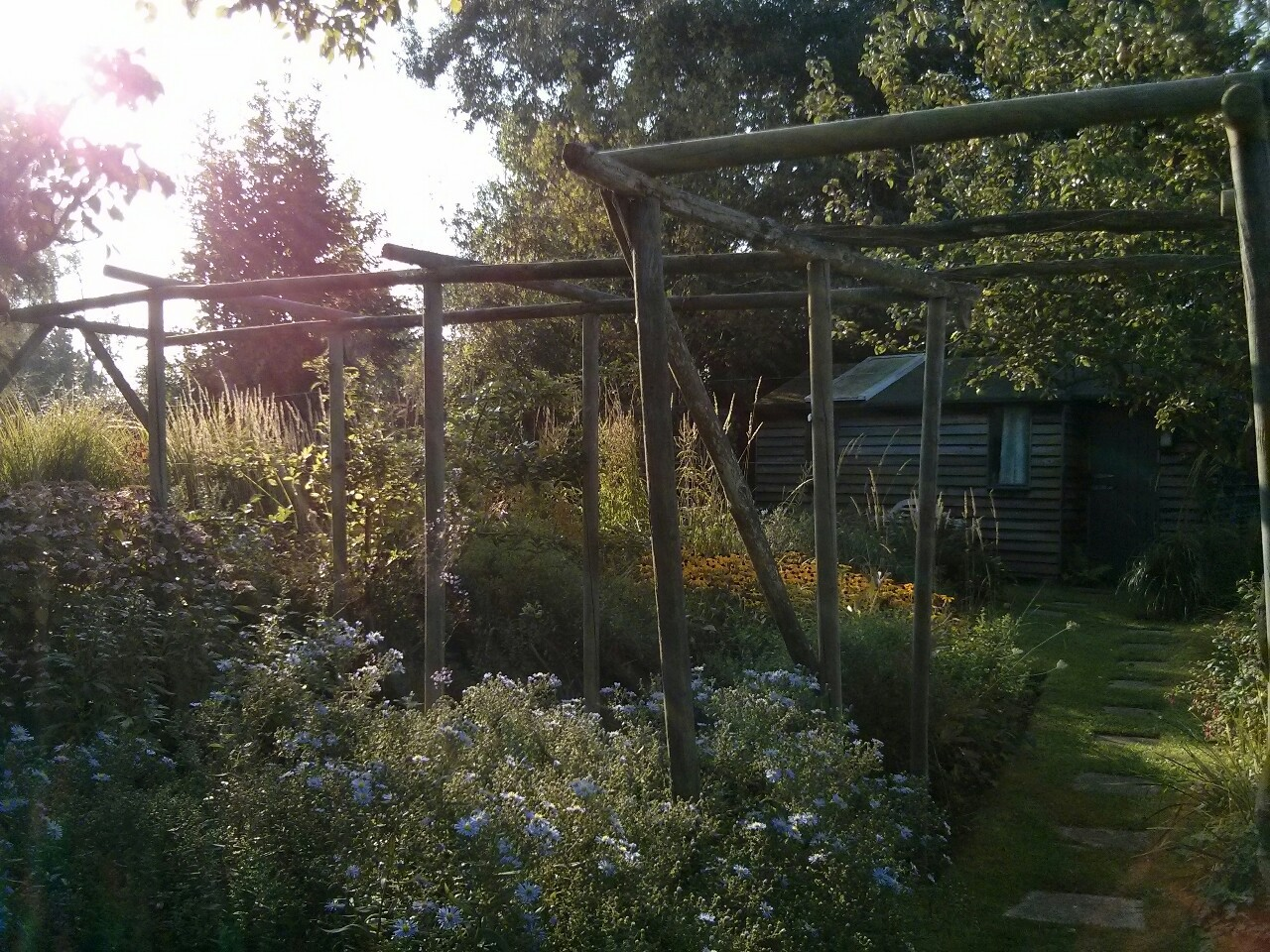All the dead in the wisteria is now cut back from this trellis and we like the open sweep of the garden without it; so I think it's time to dig the wisteria out and for all the trellis to go. For 20 years it has divided the garden with a shaded walk into two large spaces but it's time for a change.