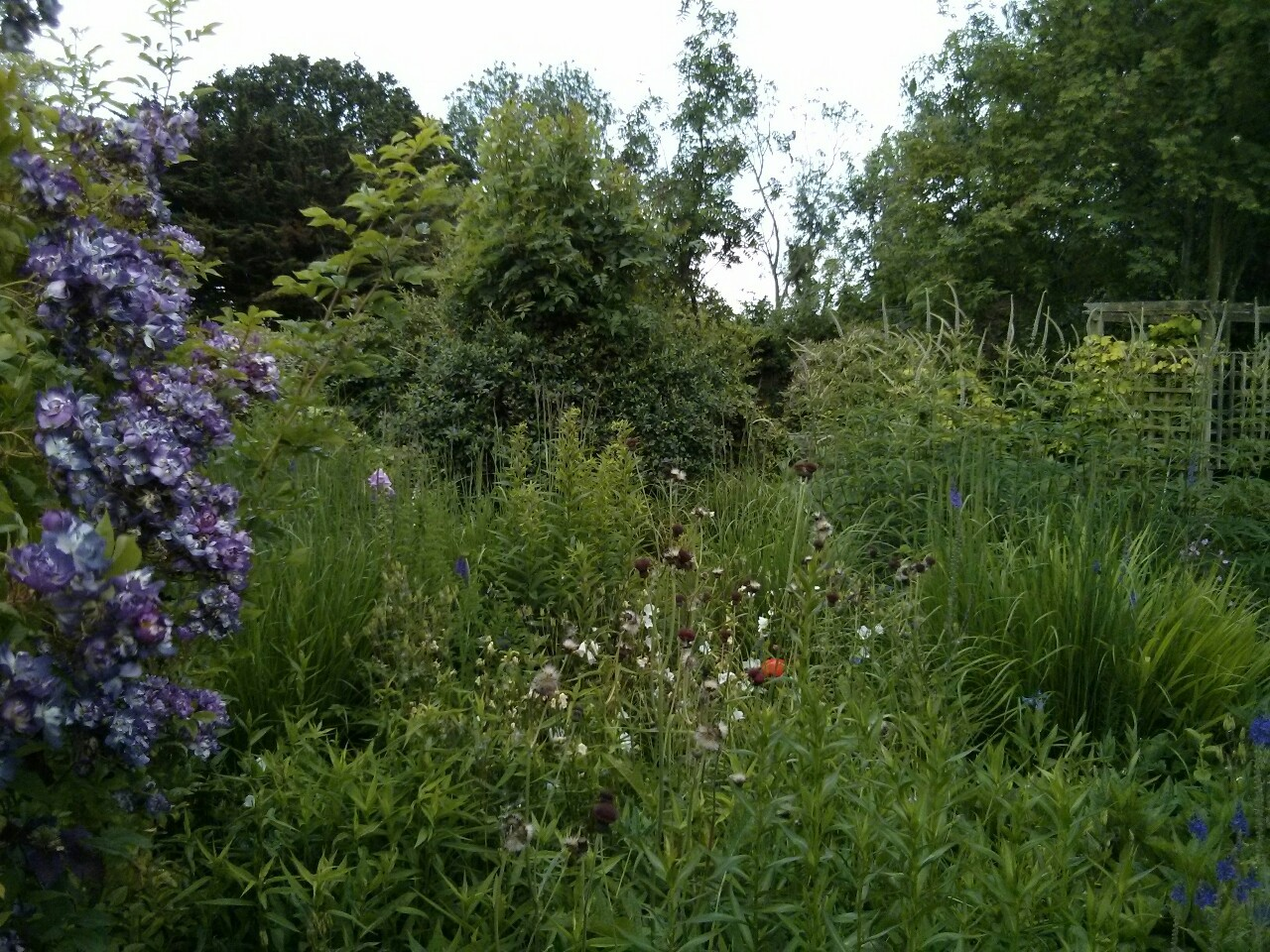 Just noticed I have not posted any photos of the garden recently; this is the same view as the photo posted a month ago on 14th May; this evening, however, is overcast and grey.