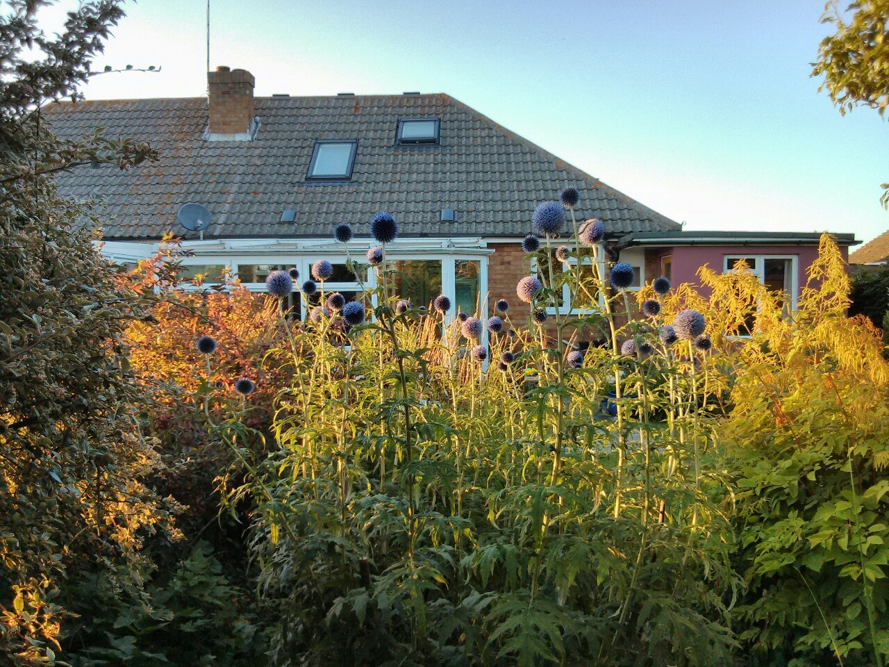 A beautiful Sunday evening in the garden.