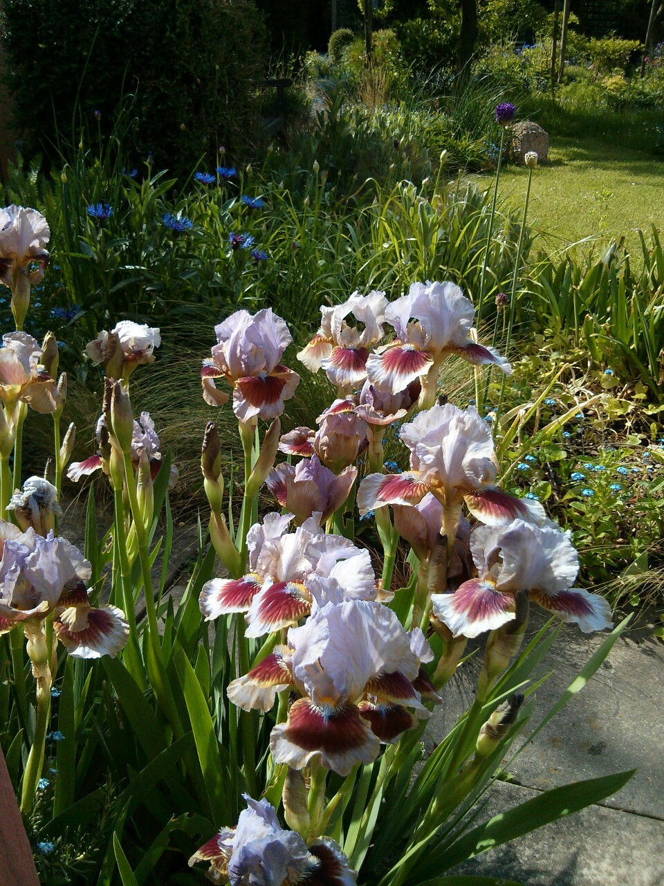 Sunday morning on the garden.