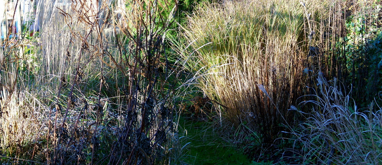 Winter sun and frost in the garden this afternoon.