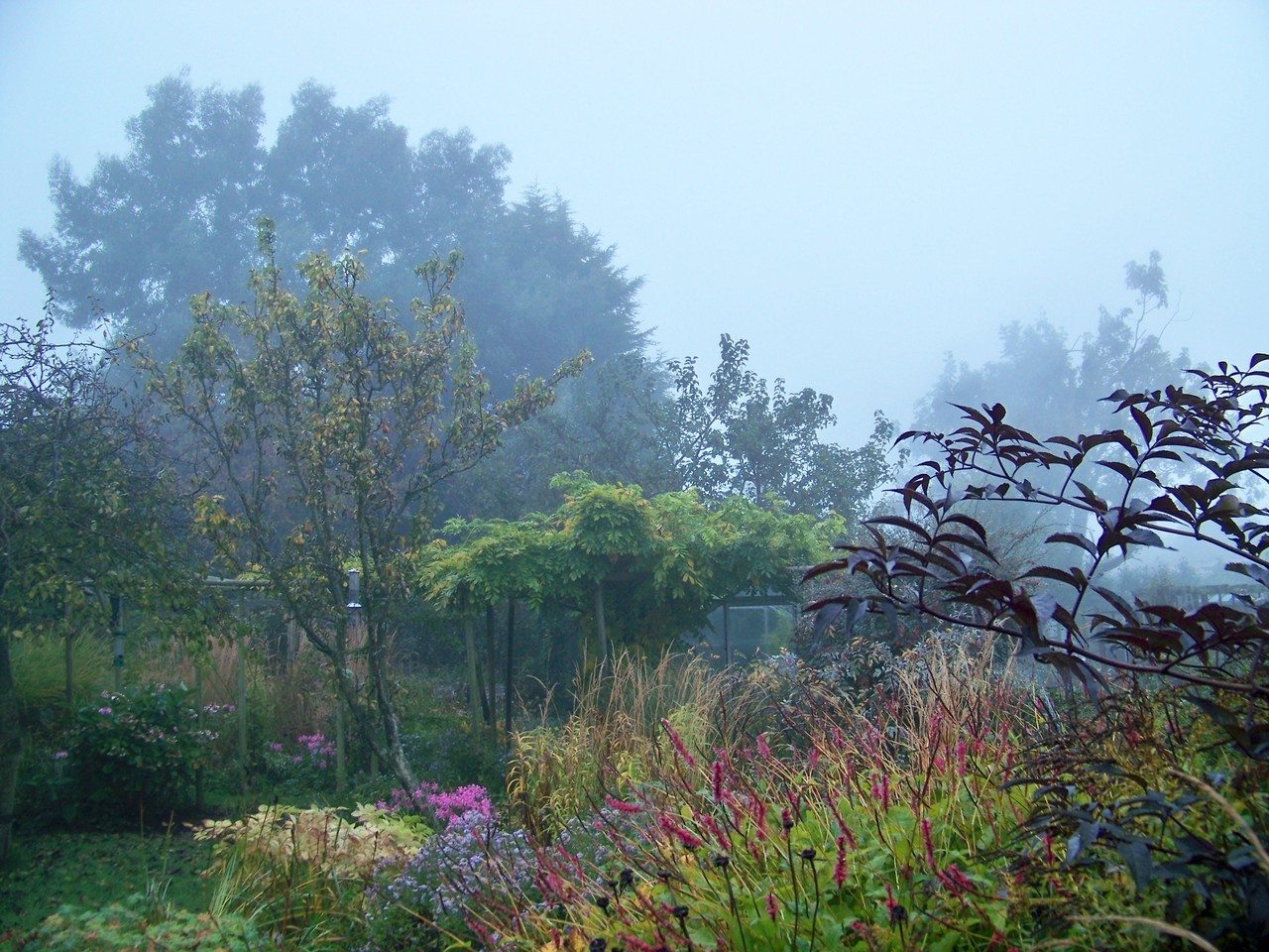 I have been drawing at the beach in the fog and clearing out storage at the studio today. The garden has looked good under fog all day.