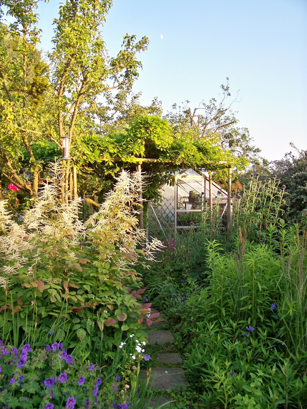 28th June 2012. The path to the greenhouse this evening.