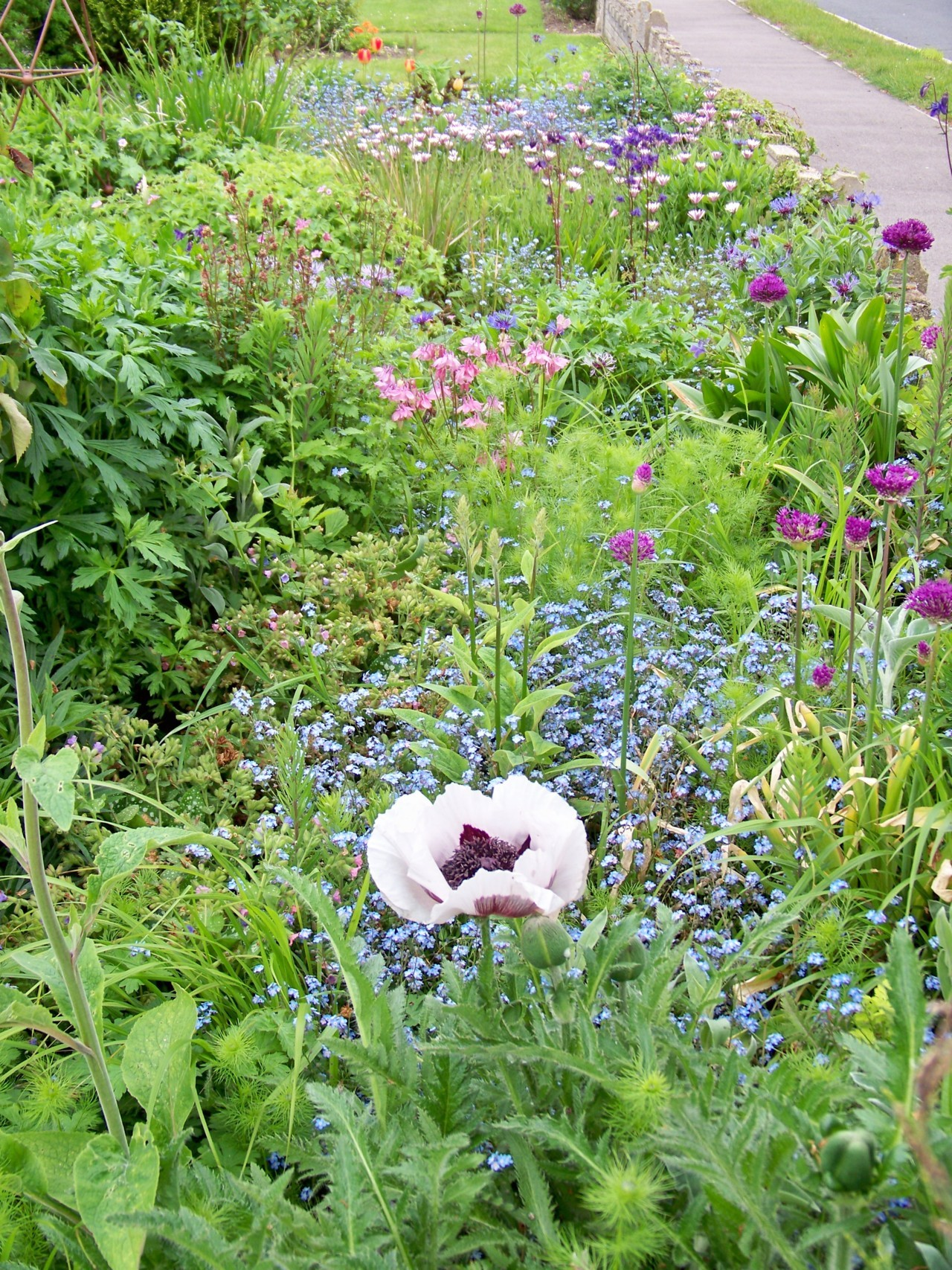 23rd May 2012. A photo for the week of the Chelsea Flower Show! Part of the front garden early this morning.