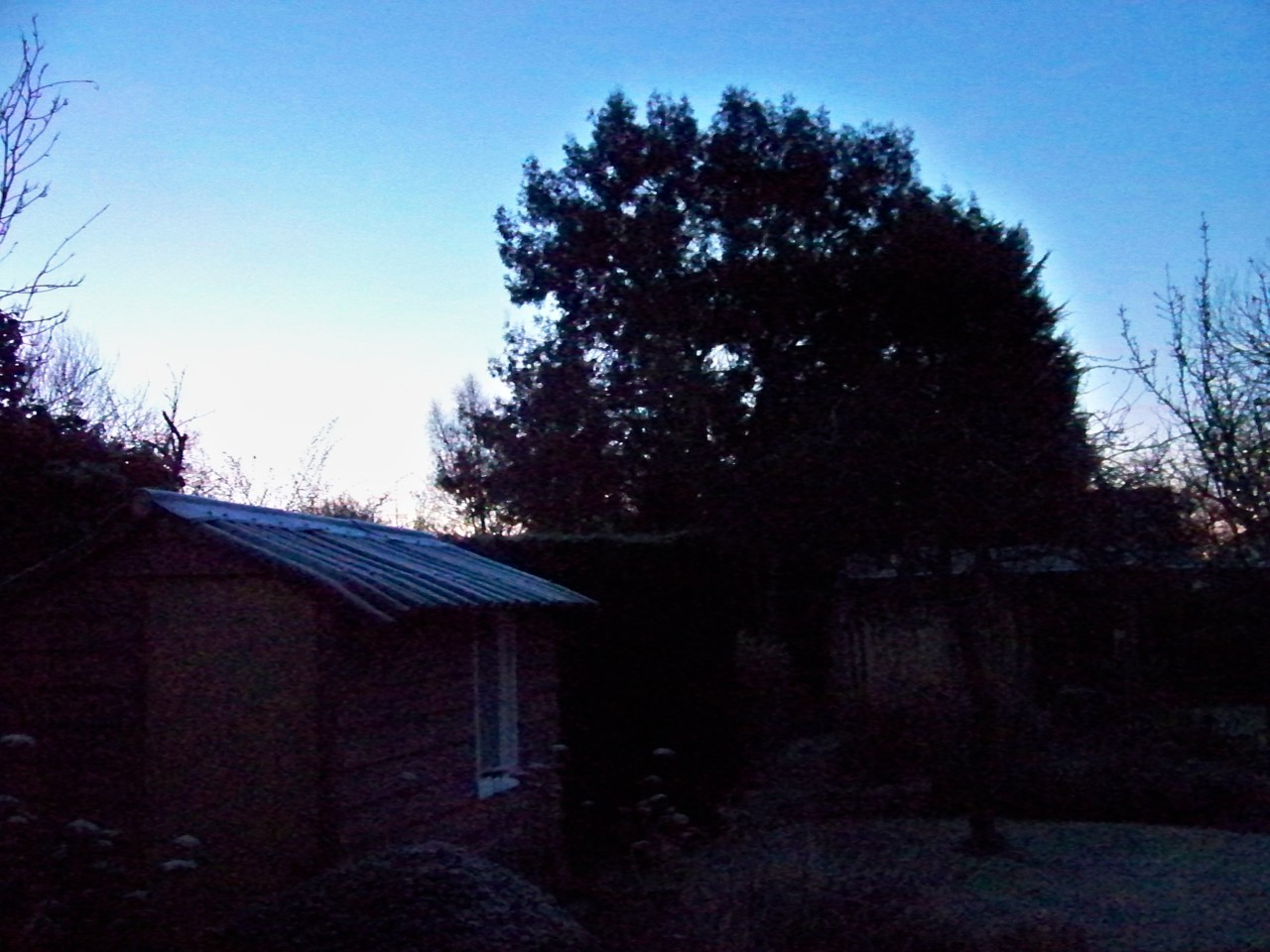 17th January 2012. The garden early this morning, clear sky and hard frost.