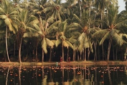 landscape_kerala.jpg
