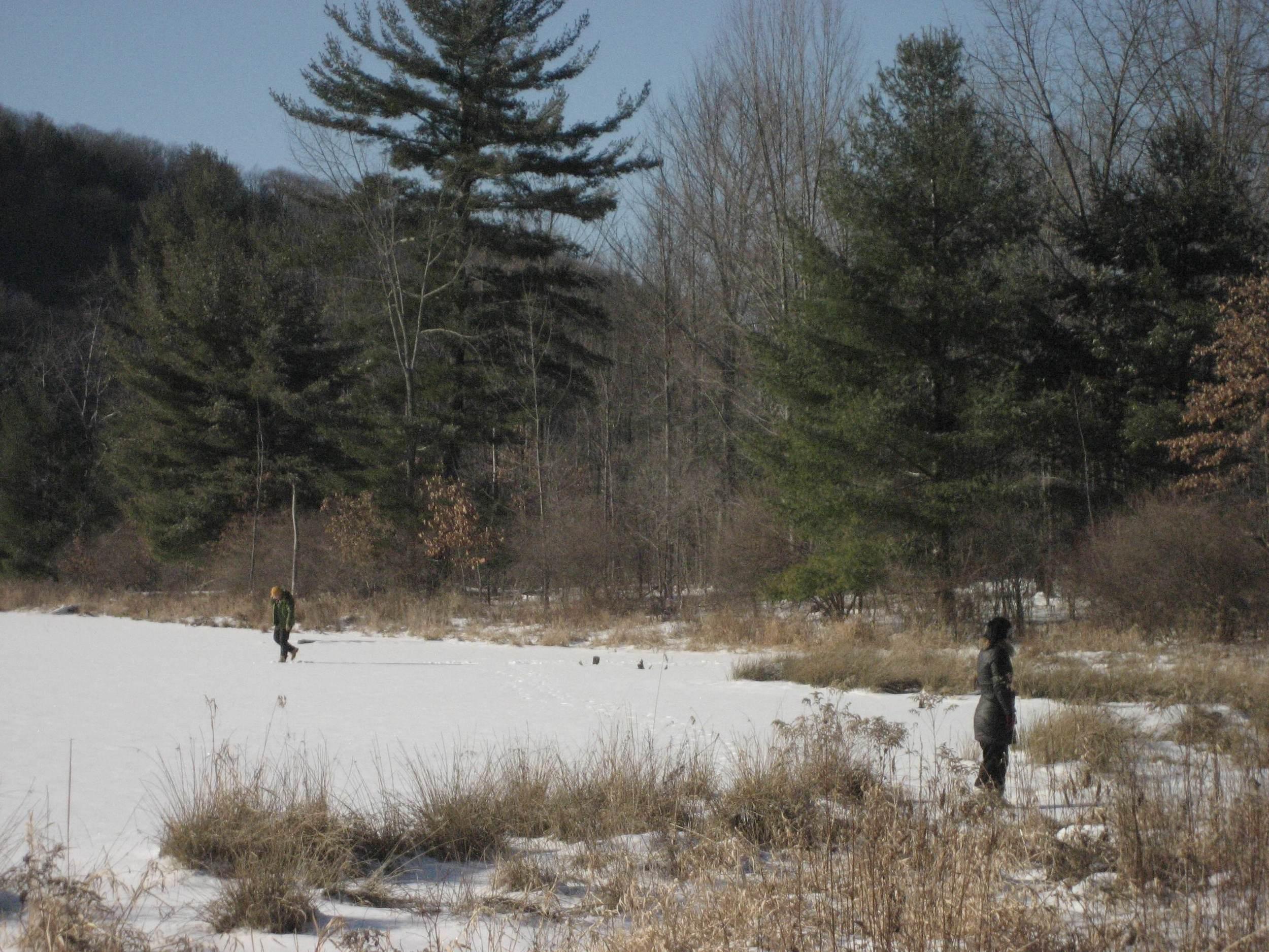 Nature Preserve, SUNY Binghamton, NY