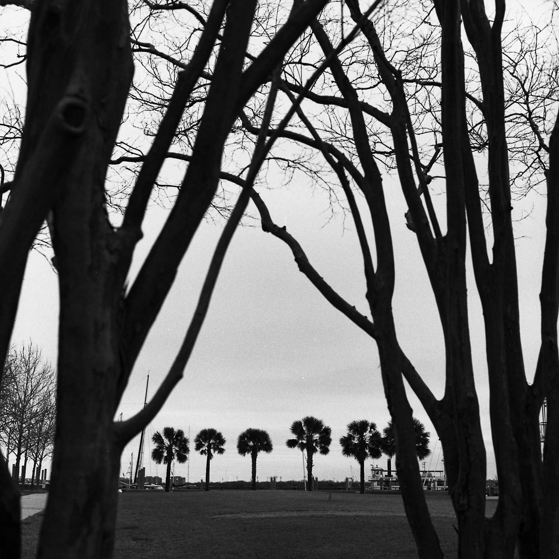 02-28-15-Hass-Charleston-G.jpg