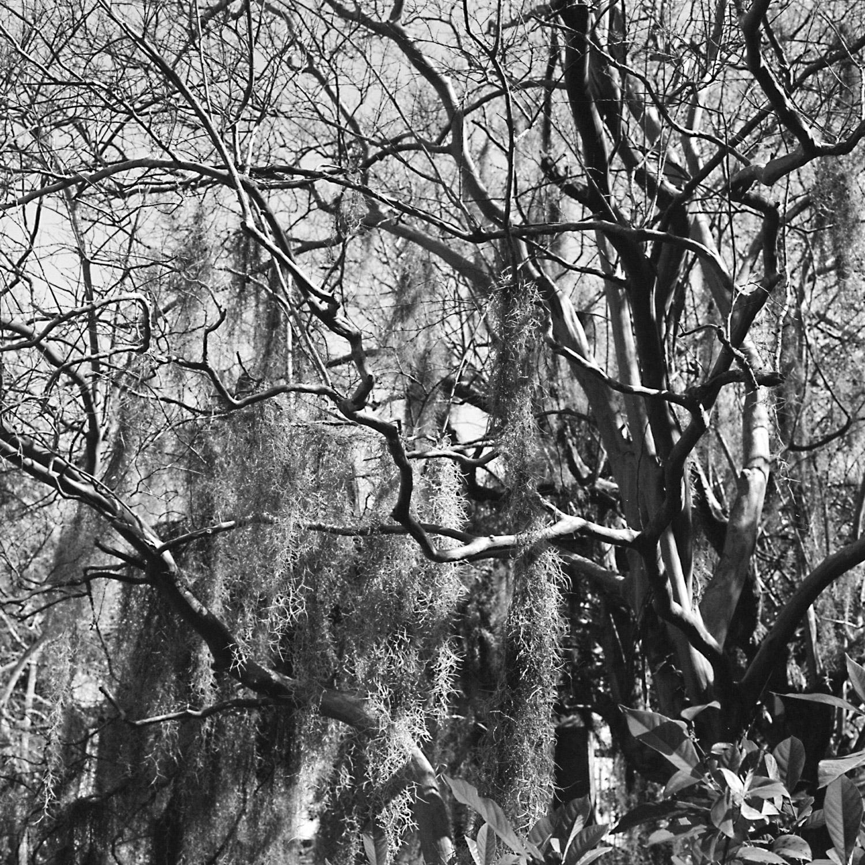 03-02-15-Hass-Charleston-L.jpg