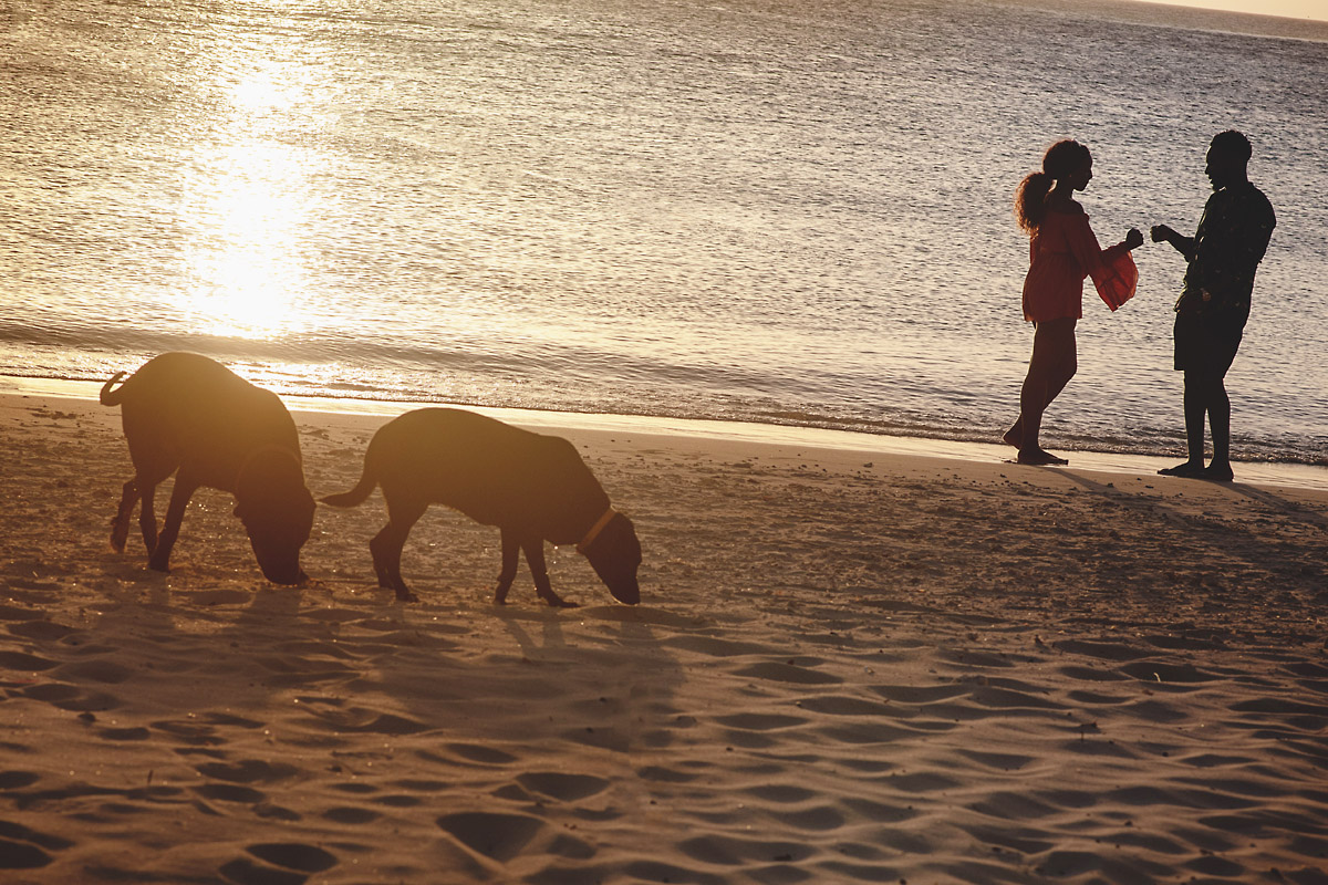 fist pump between boy and girl with two dogs on beach- engagment shoot.jpg