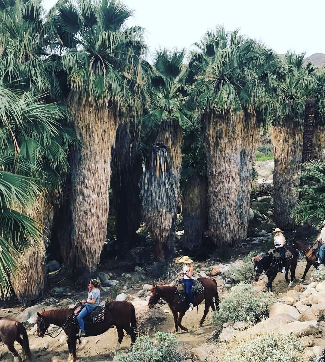 Horseback Riding with  Smoke Tree Stables