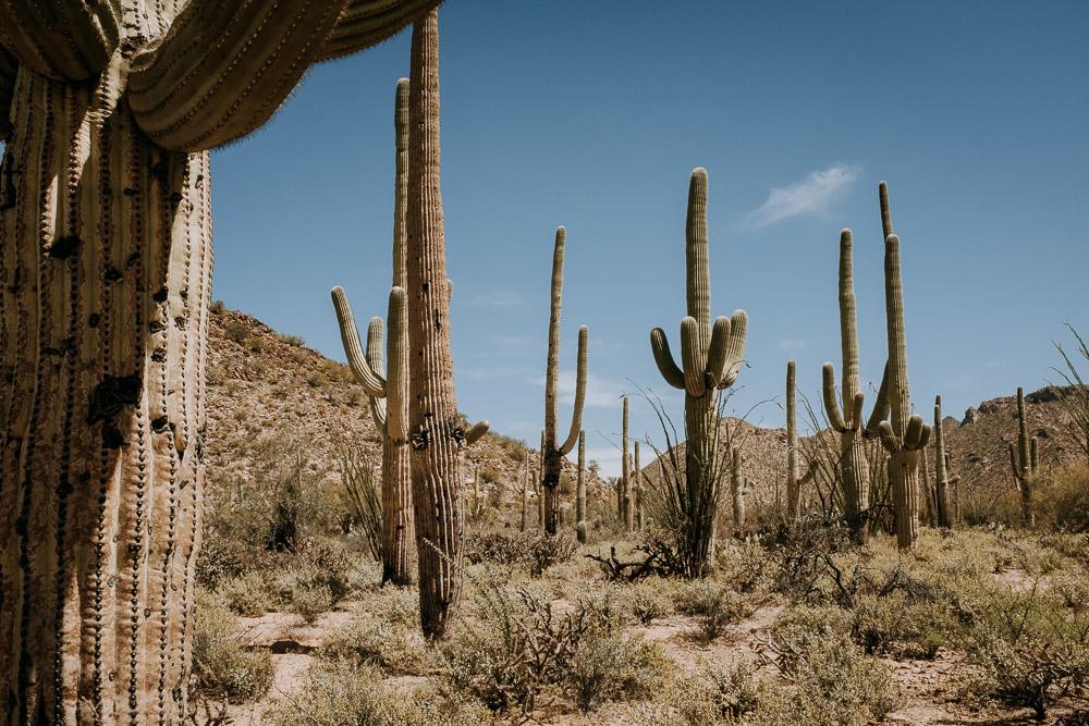 12. Saguaro National Park, AZ