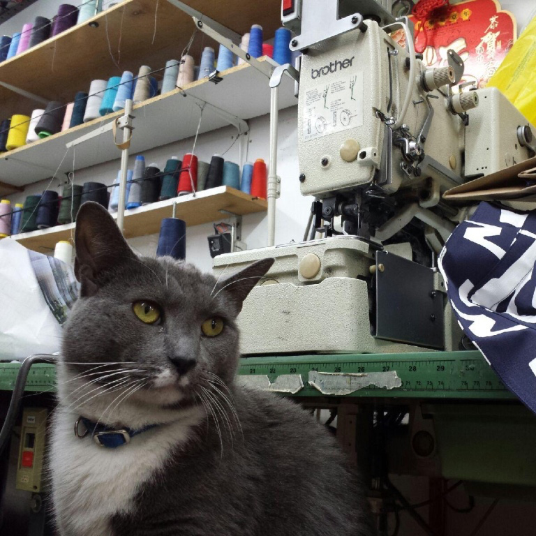 Factory cat. Companion and mouse control all in one. NYC factories have to be efficient to survive.