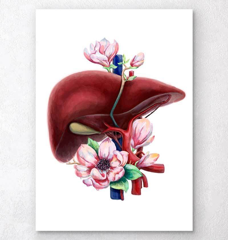 The beautiful liver, all dolled up. Art from Codex Anatomy.