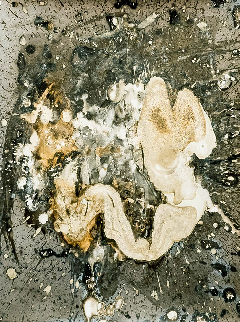 UNTITLED (1999) photo chemicals on photo sensitive paper, 50 x 40 cm