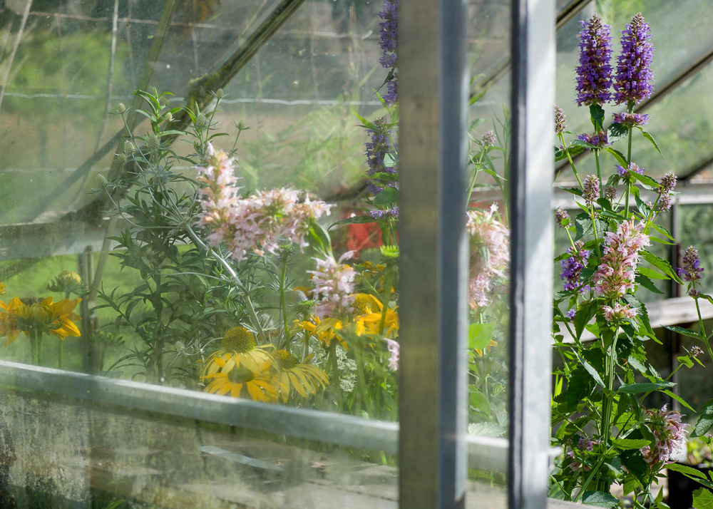 _Garden and Greenhouse_-13.jpg