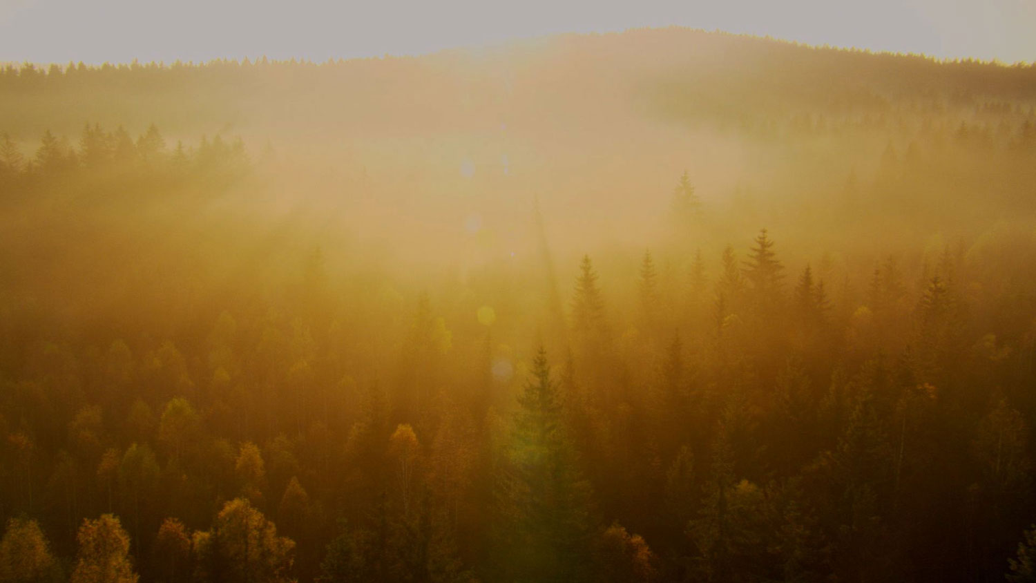 02-Dawn-Forest-WEB.jpg
