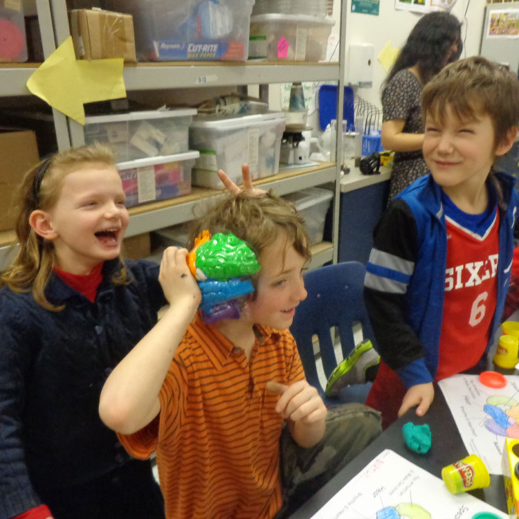 Kids making model brains out of play-doh in GLIA's  Elementary Outreach  Program
