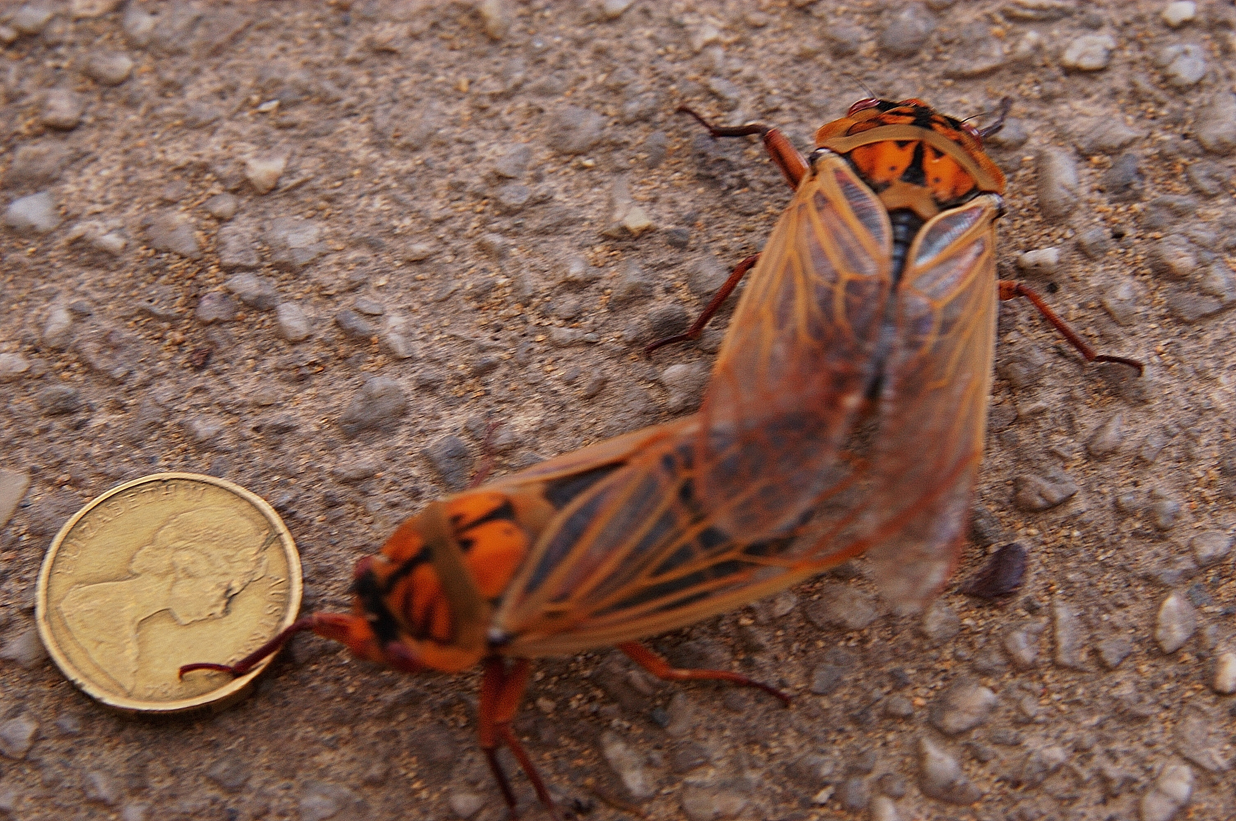 During our springtime visit, the cicadas had hatched. There were thousands of them all calling at the same time. The noise was incredible, and we saw them everywhere.
