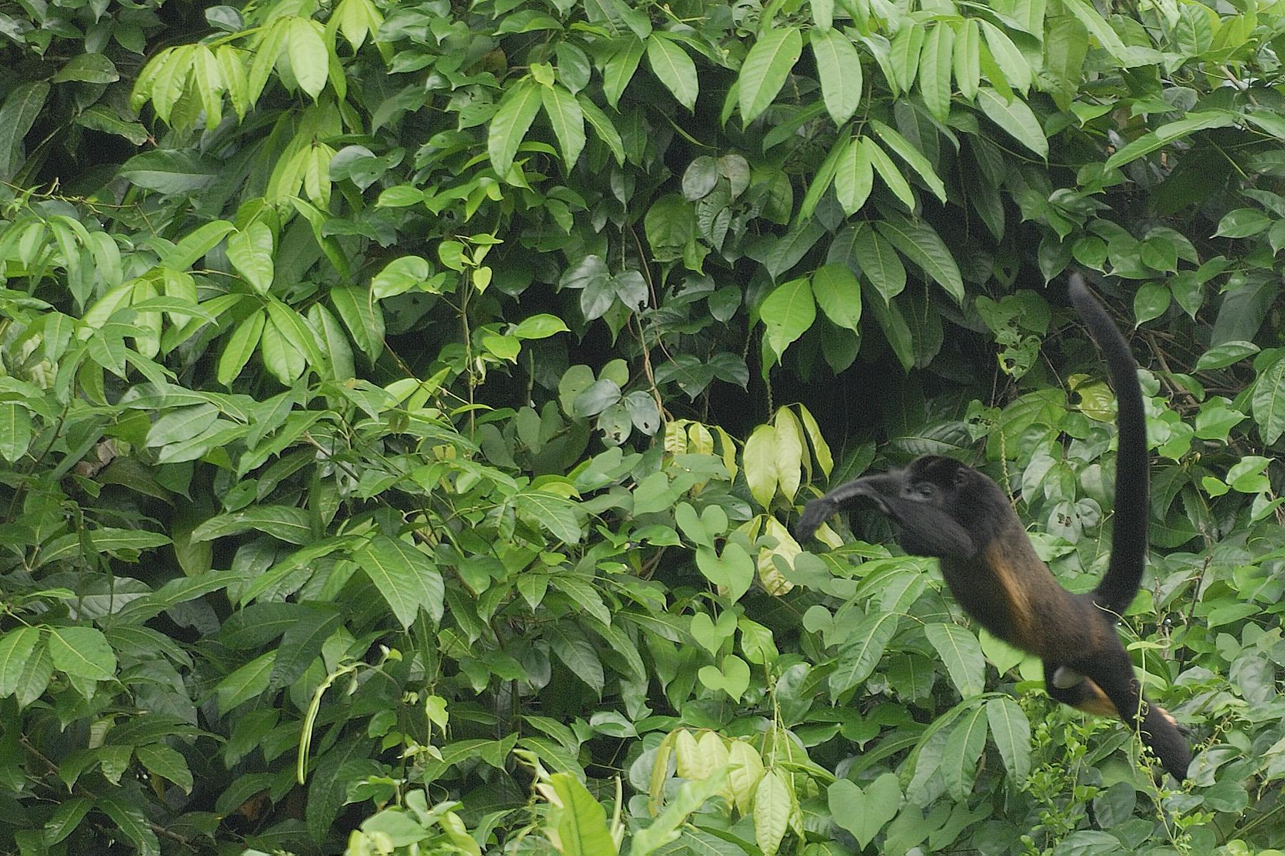 20070630 - Costa Rica - 1196.jpg