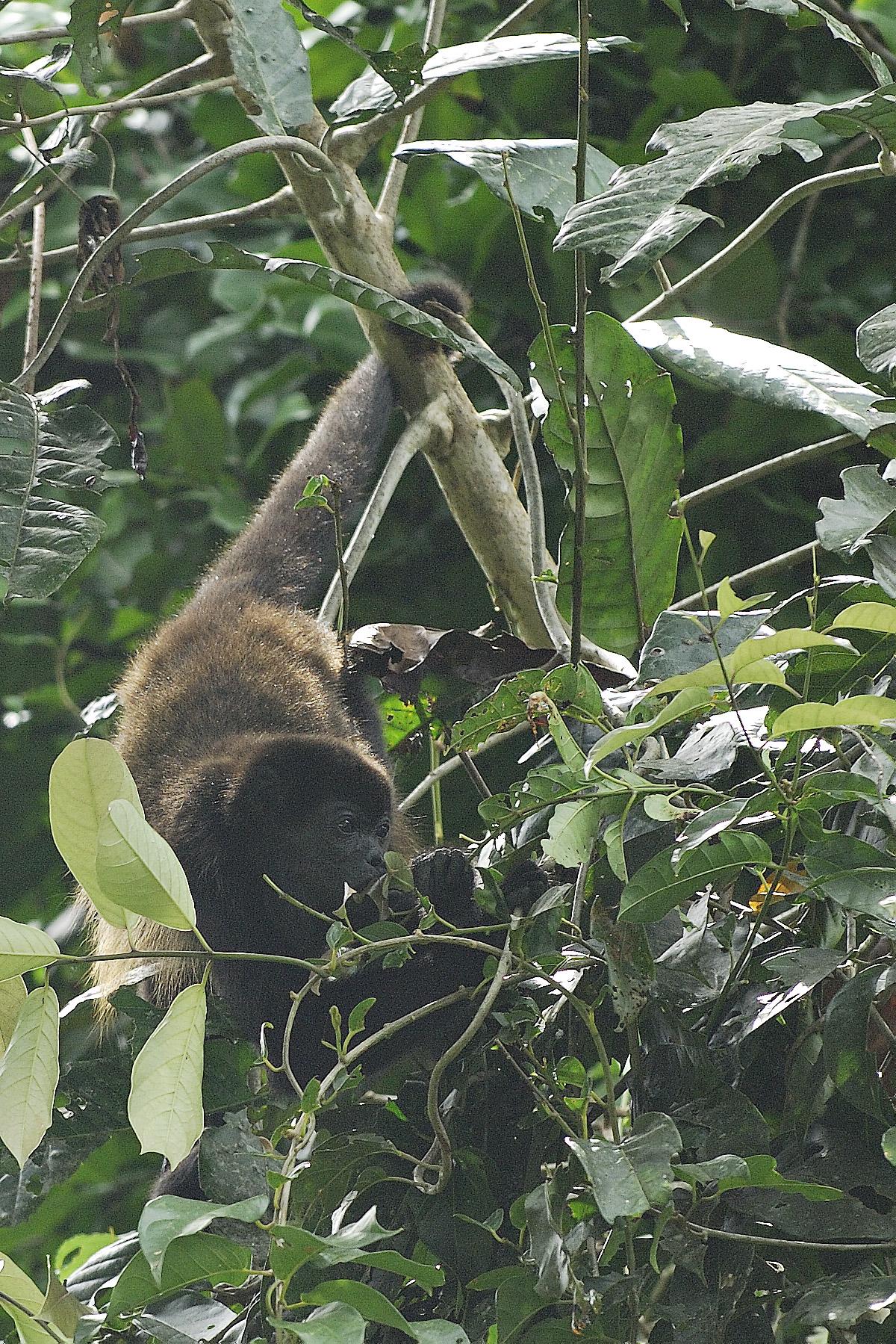 20070630 - Costa Rica - 1092.jpg