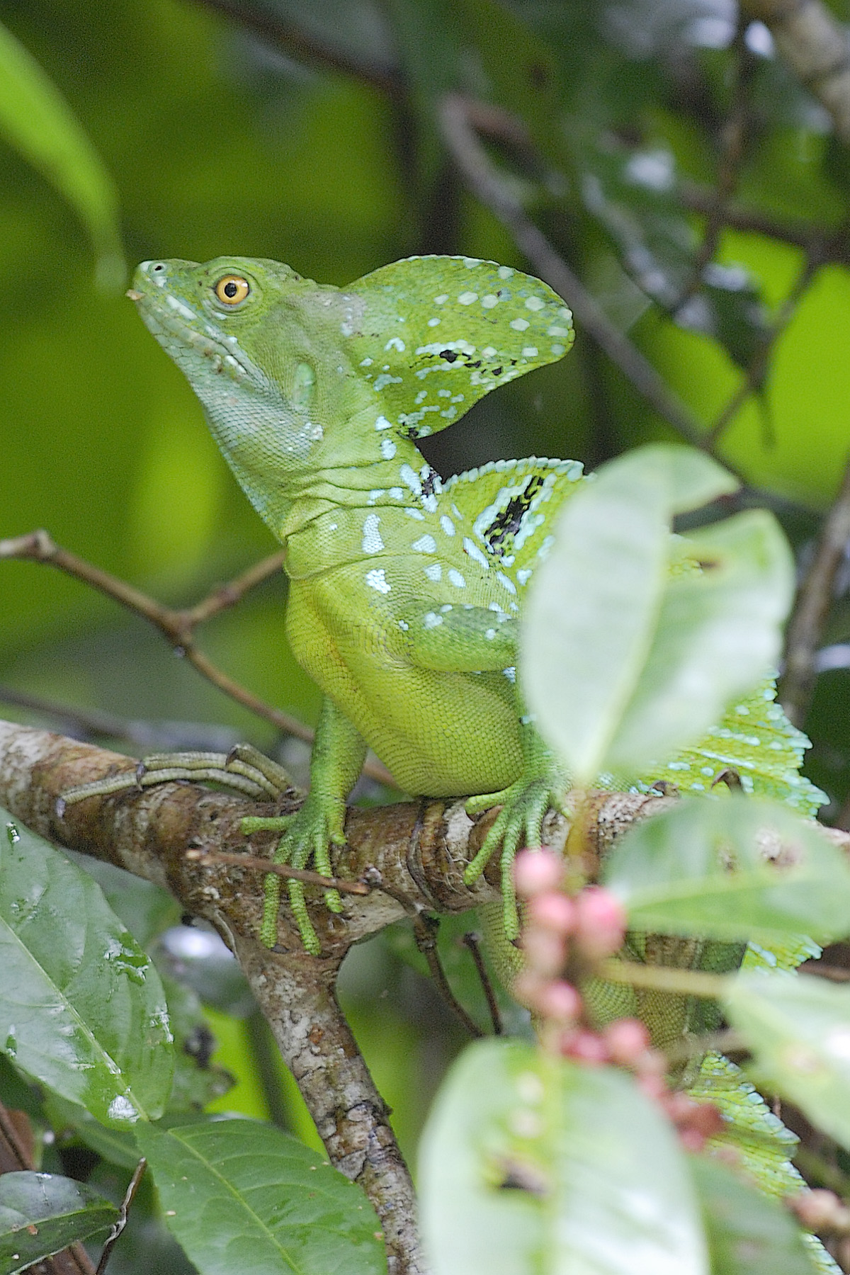 20070630 - Costa Rica - 1056.jpg