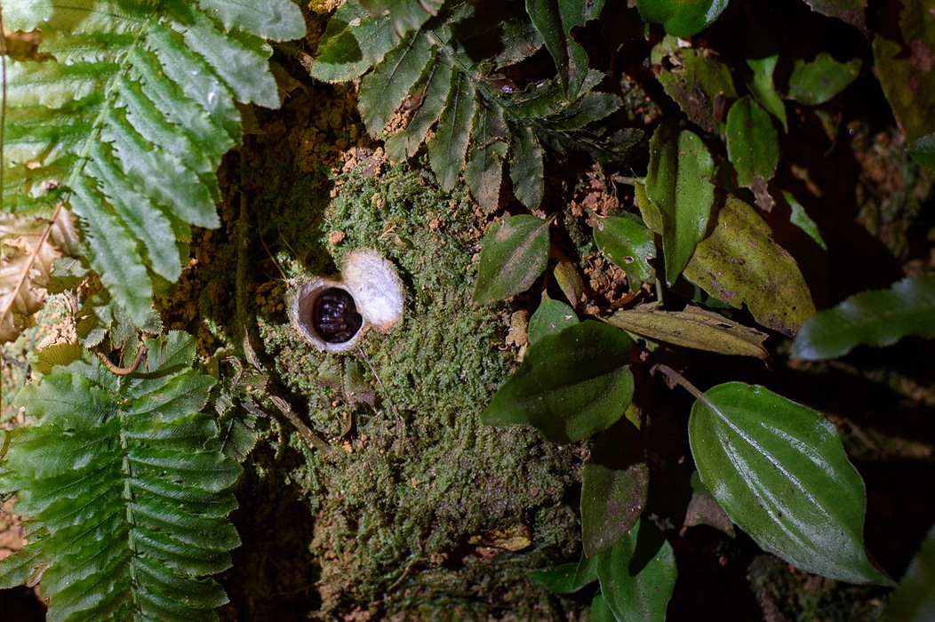 """One of our favorite bugs is the trap door spider that builds it's """"hole"""" perfectly camouflaged in the embankment!"""