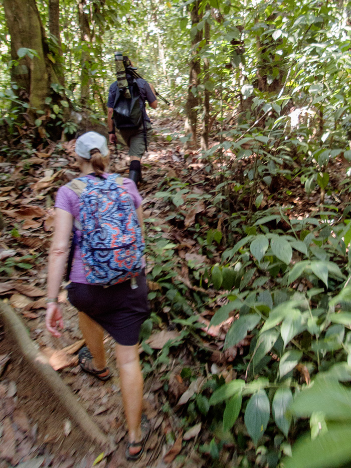 We hiked about 7 miles through the shaded jungle, stopping frequently to see wildlife along the trail,