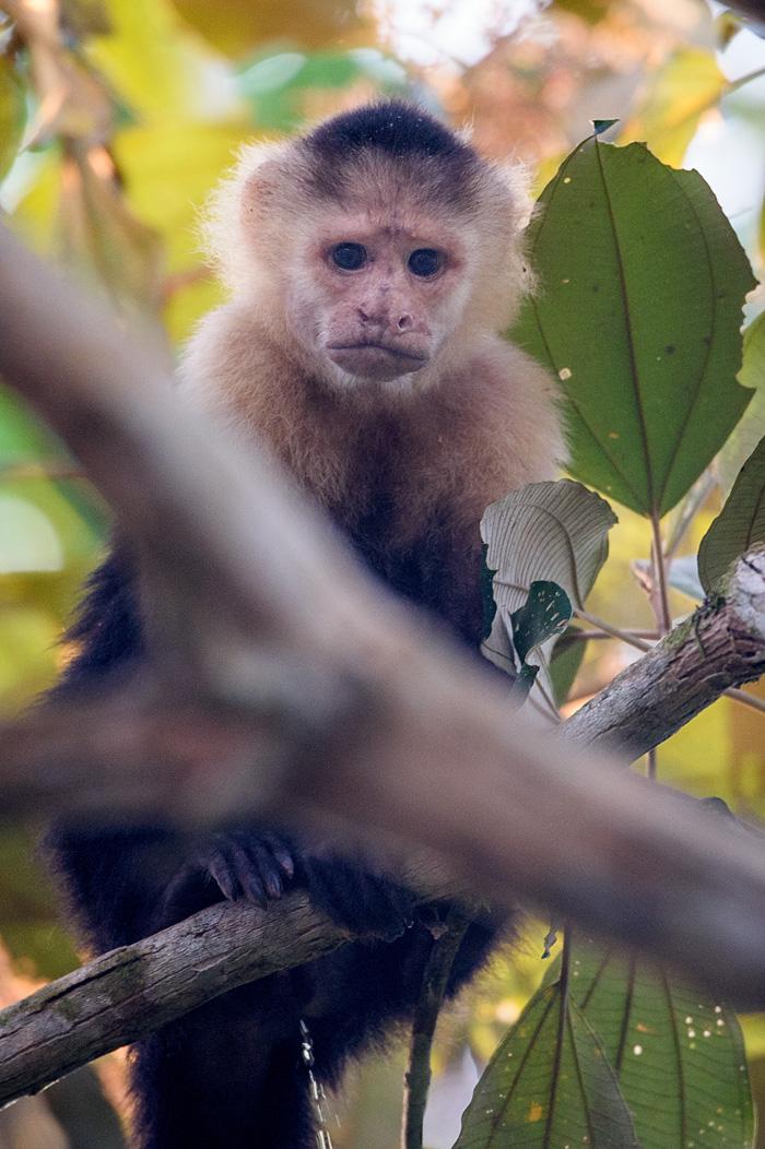 20160218 - Costa Rica (Mangrove Tour) - 031.jpg