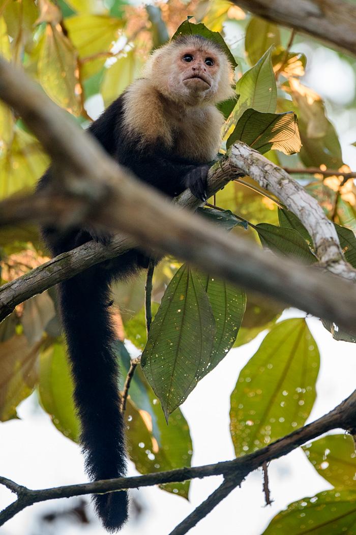 20160218 - Costa Rica (Mangrove Tour) - 036.jpg
