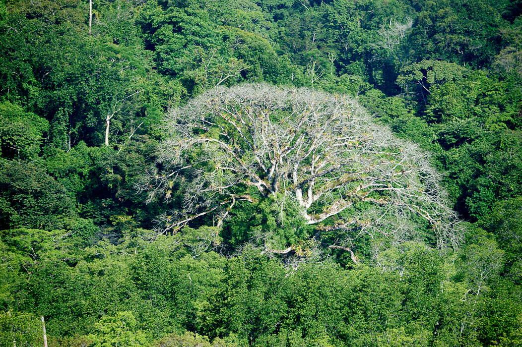"""We visited during the """"dry Season"""" and while things were still quite green, some trees were without their leaves."""