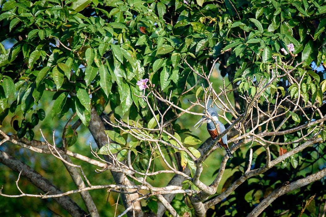 20160218 - Costa Rica (Mangrove Tour) - 057.jpg